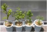 plants-Fuchucampus